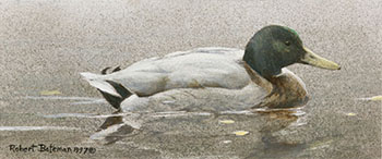 Mallard Duck by Robert Bateman