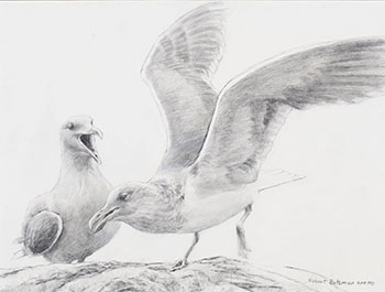 Seagulls by Robert Bateman