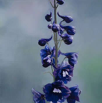 Delphinium by James Lahey