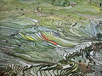 Rice Terraces #2, Western Yunnan Province, China, 2012 by Edward Burtynsky